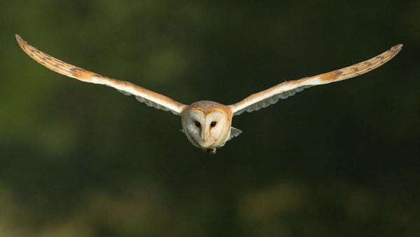 Support barn owls on CRT properties